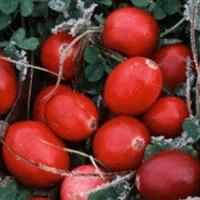 n_cranberries